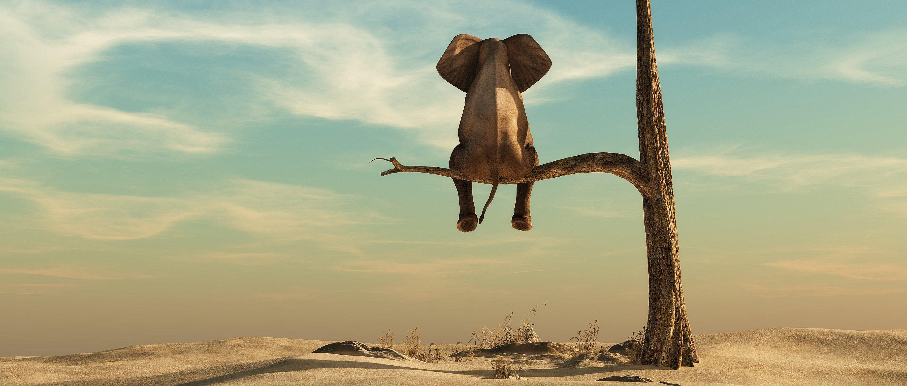 Elephant_declinaison1